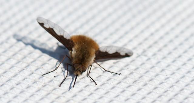 Flugpause auf der Beberich: Wer kennt dieses Tier?